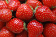 Fraises - Strawberries