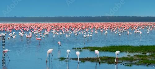 Garden Poster Flamingo flocks of flamingo