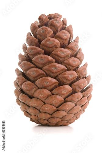 Obraz Great fir cone. - fototapety do salonu
