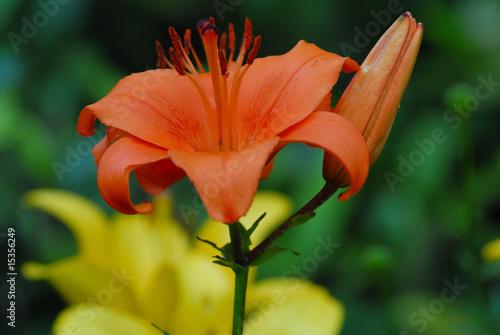 Blüte im Garten - 15356249