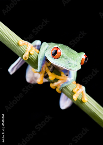 Fotografia, Obraz Small animal - frog