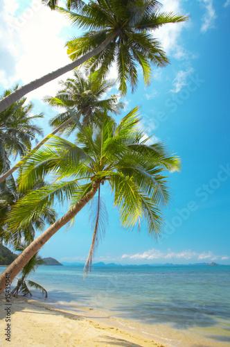 Foto-Lamellenvorhang - palms (von Dmitry Ersler)
