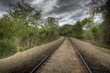 HDR image of railroad tracks through forest