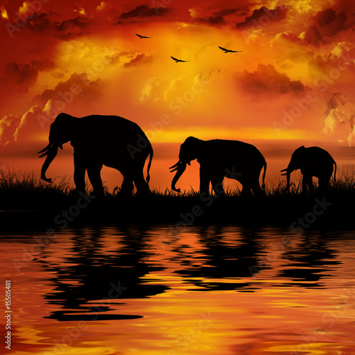 Fotobehang Chocoladebruin Elephants on a beautiful sunset background