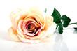 canvas print picture - künstliche Rose