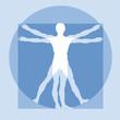 Menschliche Proportionen - Sportmedizin