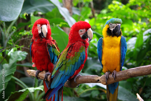 In de dag Papegaai Parrots in South East Asia