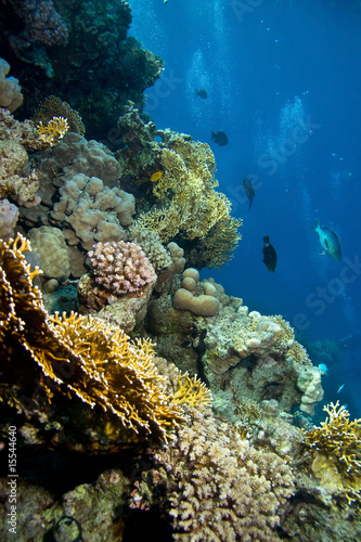 Foto-Leinwand - Photo of coral colony