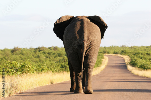 Foto op Canvas Olifant South Africa's Wildlife