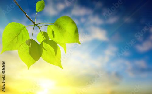 Foto-Kissen - leaves of poplar