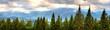 Panoramatannen