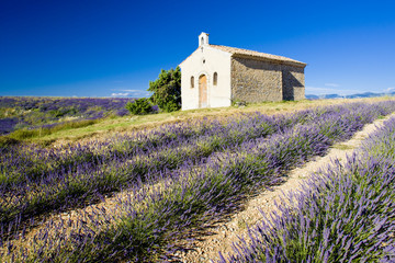 Panel Szklany Podświetlane Lawenda chapel, Plateau de Valensole, Provence, France