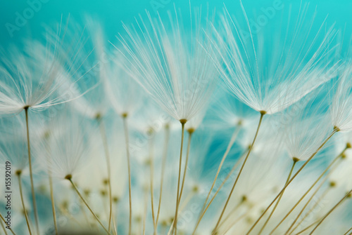 Canvas Prints Dandelions and water dandy seeds against blue background