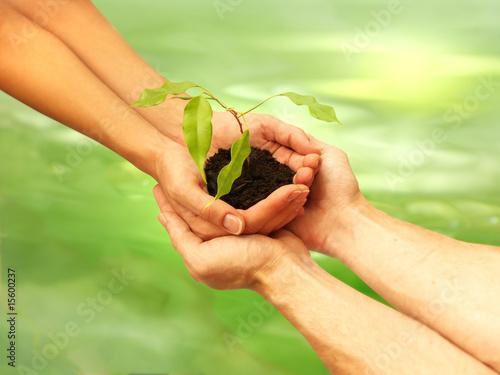 Fotografie, Obraz  business écologie concept 3