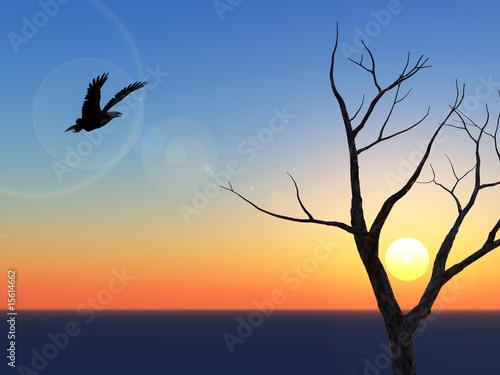 Photo  Lone Eagle Sunset