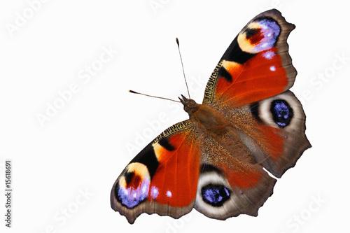 Tuinposter Vlinder Pfauenauge