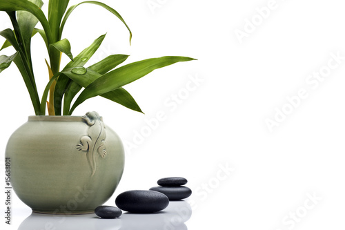 Akustikstoff - Stylish ceramic pot with bamboo leafs and stones