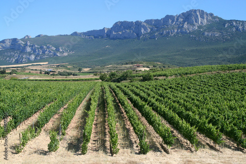 Vineyard in La Rioja