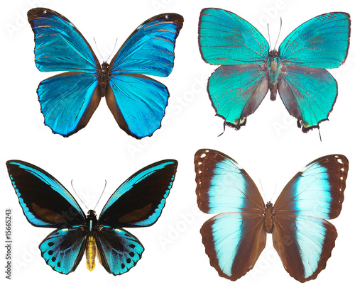 Fotografie, Obraz  Some various butterflies  isolated on  white