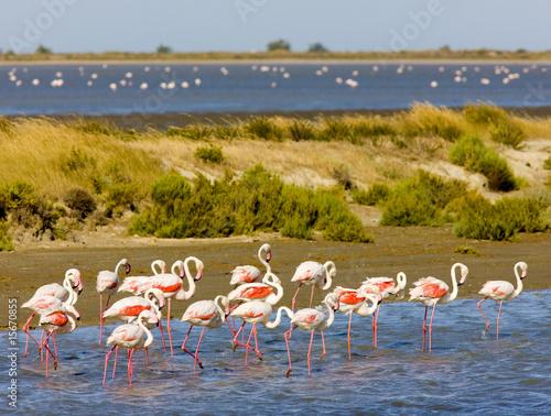 Foto op Aluminium Flamingo flamingos, Parc Regional de Camargue, Provence, France