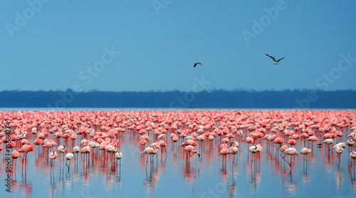 Poster Afrique du Sud flocks of flamingo