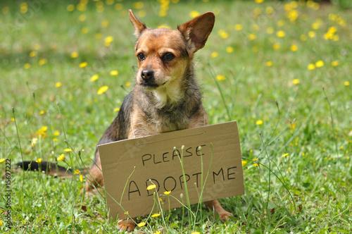 Photo message du chien