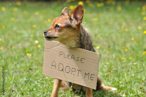 adopter un chien Canvas Print