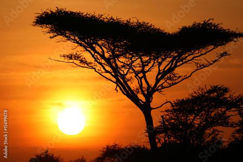 Staande foto Afrika Acacia Tree Sunset, Serengeti, Africa