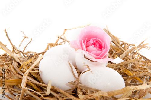 Fototapeta Bird nest obraz na płótnie