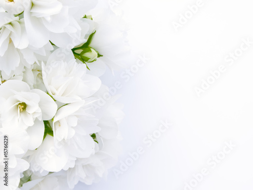 Jasmine Bouquet Canvas Print