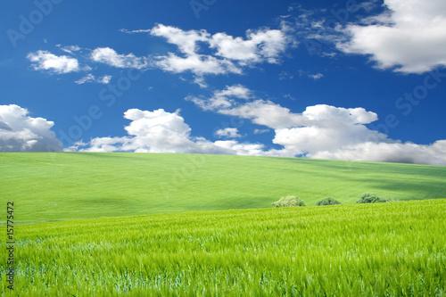 In de dag Lime groen grass