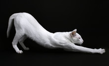 Foreign White Stretching