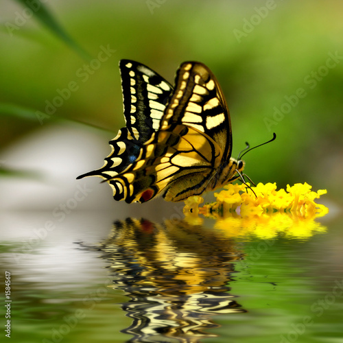 Photo wonderfull butterfly world - schwalbenschwanz