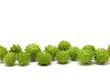 Green Chestnuts