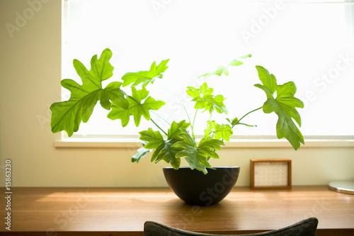 Foto  Laubpflanze