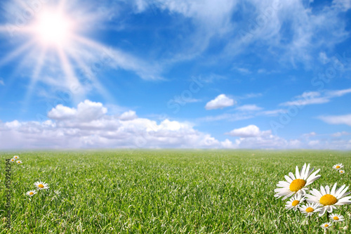 Staande foto Lente Bright Beautiful Daisy and Grass Field