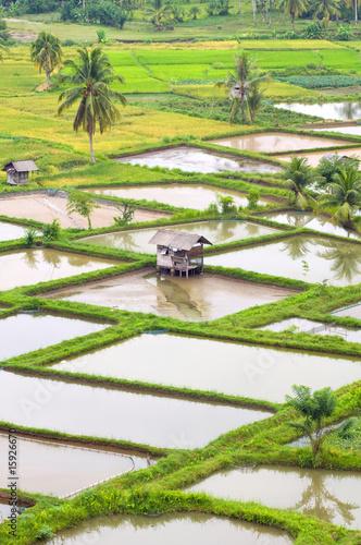 Fotobehang Zwavel geel Paddy field scenery in Bukit Tinggi Indonesia