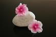 Stein mit Blüten 1