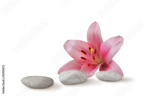 Plissee mit Motiv - zen still life: pebbles and pink lily