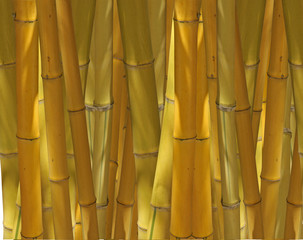 Fototapeta fond de bambous jaunes