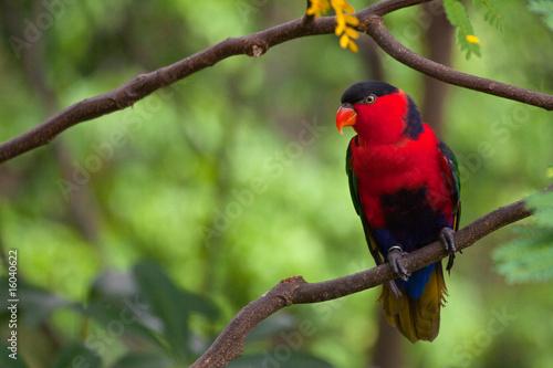 Obraz na plátne  parrot