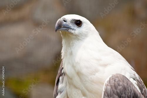 Fotografía  eagle