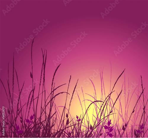 grass vector silhouette and sunset