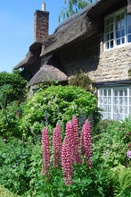 Thatched Cottage Garden