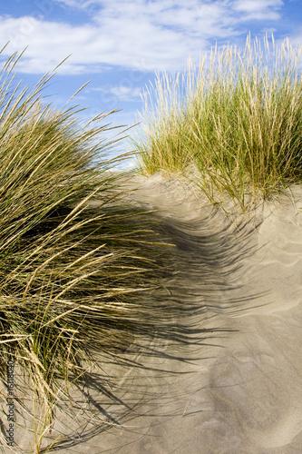 """Foto-Kissen - """"Dune"""" (von Bastian Blum)"""
