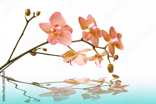 Akustikstoff - wasser,orchidee