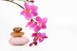 wellness,orchidee