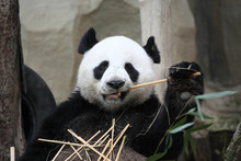 Hey !!This Is Thai Panda