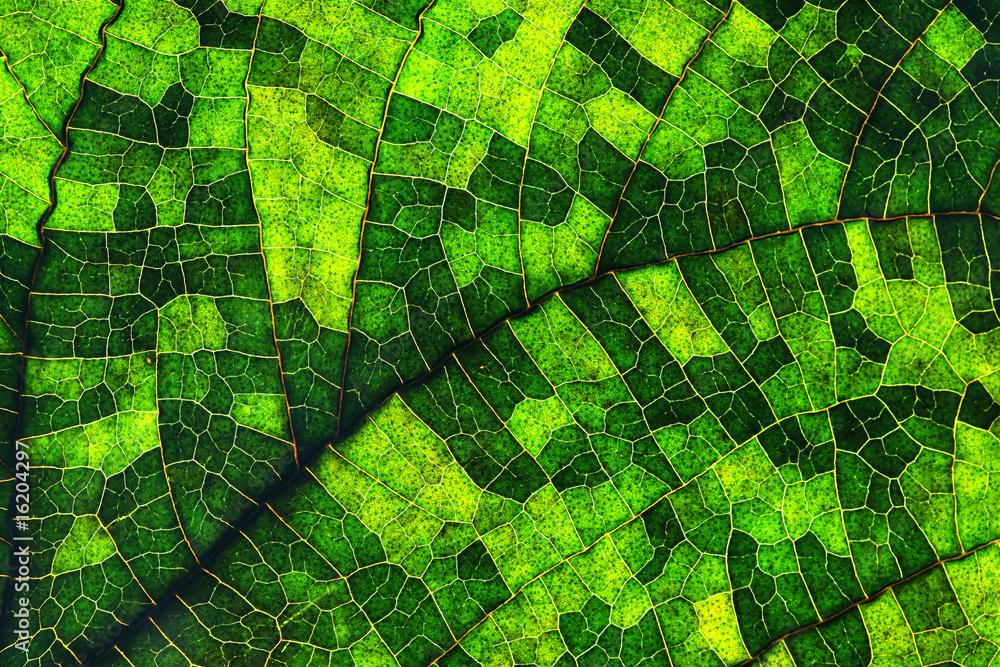 Fototapety, obrazy: Macro of a leaf