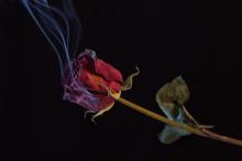 Smoking Red Rose